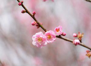 bloomtwig